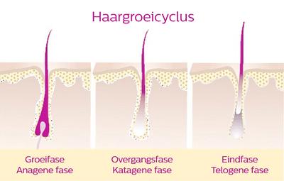 haargroeicyclus medium